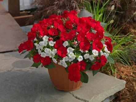 Recipes Patriotic Planting by Summer Container Garden Recipes Plants Container