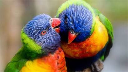 Birds Colorful Parrots Wallpapers Background Desktop Water