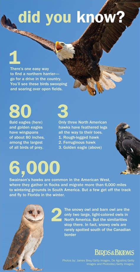 bird facts good to know pinterest the o jays facts