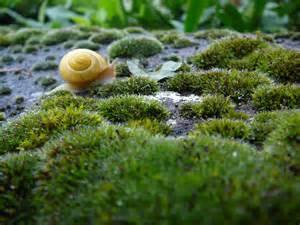 rasen kalken regen kostenlose foto natur gras pflanze rasen wiese