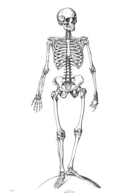 Kleurplaat Skelet Mens by Kleurplaat Skelet Afb 9340
