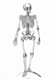 Coloring Page Skeleton Img 9340