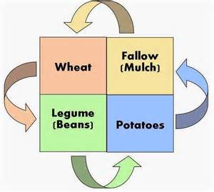 Example of Crop Rotation System