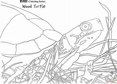 Coloring Turtle Pages Wood Printable Snakes Holidays