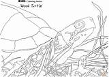 Coloring Turtle Pages Wood Printable Snakes Holidays Drawing Terrapin sketch template