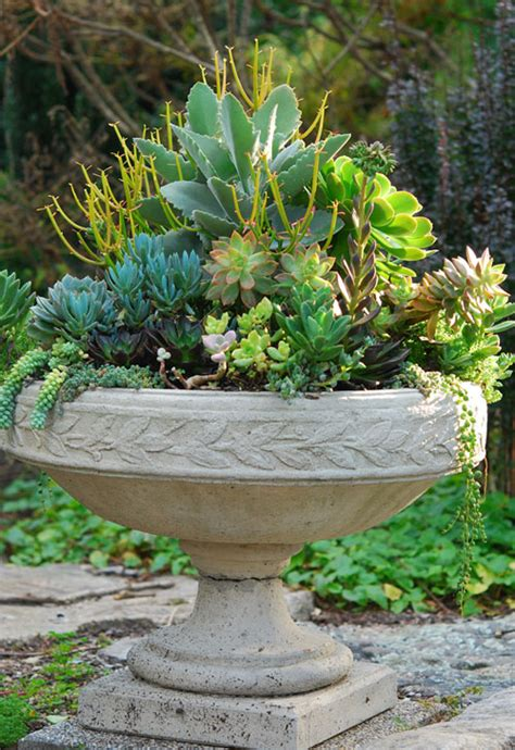 succulent containers garden foreplay
