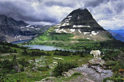 mountain goat glacier national park montana usa art wolfe
