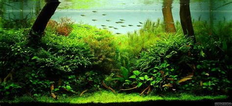 Aquascape In Aquariums