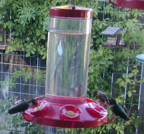 hummingbird feeding solution recipe food com