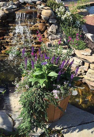 sun perennials randys perennials water gardens