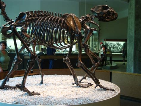 17 Best Images About Extinct........ And Fossilized On