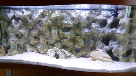 d 233 cor d aquarium pour cichlides
