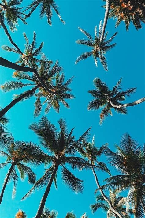 Pinterest: @viviimoreira 🌹   Tree wallpaper iphone, Palm ...