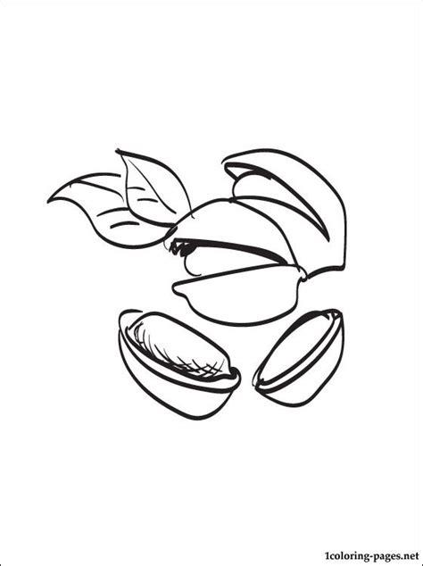 pistachio coloring page coloring pages