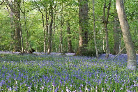 cuisine bois massif promenades en forêt de fontainebleau 16 suggestions à retenir