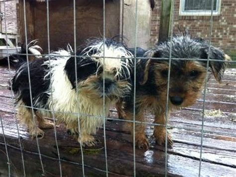 dogs rescued  nc puppy mill