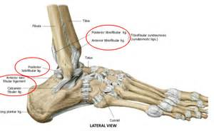 Lateral Collateral Ligament Ankle