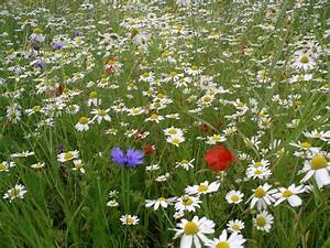 annual and perennial wildflower meadow | Garden Design ...