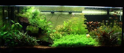 decorer un aquarium vide mon 180 amazonnien plant 233 page 3