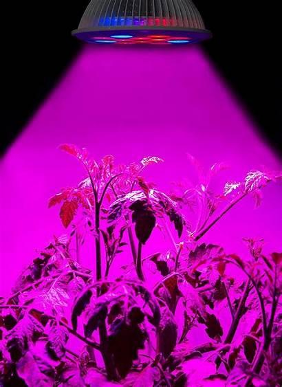 Greenhouse Grow Gardening Led Lights Hydroponics Organic