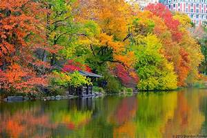 Thoughts From My Camera: Central Park Fall Colors  Fall