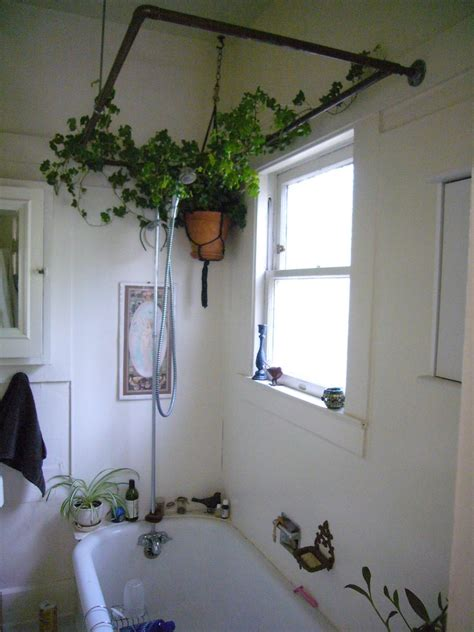 Small Plants For The Bathroom by Bathroom Fascinating Bathroom Plants Wowing You In Fresh
