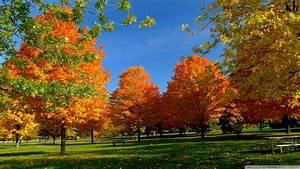 Download Orange Fall Trees Wallpaper 1920x1080 | Wallpoper ...
