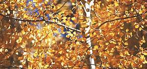 autumn gifs | Tumblr
