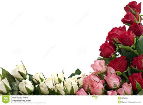 roses   corner royalty  stock image image