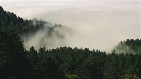 fog forest nature pine  photo  pixabay