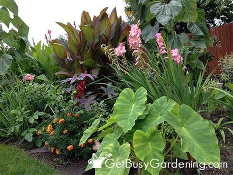 tropical garden plants list pinterest the world s catalog of ideas