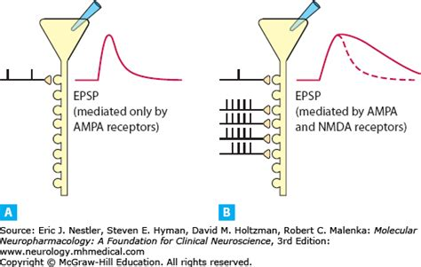 Full Form Of Nmda what is the difference between nmda and a receptors