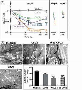Claudin-5 peptides decrease tightness of an in vitro model ...