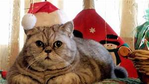 11 cats who aren t looking forward to Christmas BT