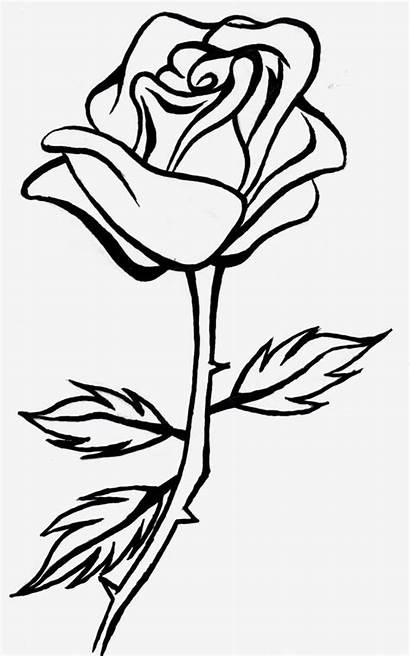 Rose Outline Drawing Clip Line Clipart Clipartion