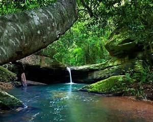 Rainforest, River, Turquoise, Water, Green, Moss, Rocks, Tree