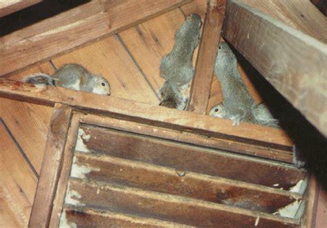 Squirrel Control South Boston Bat Removal