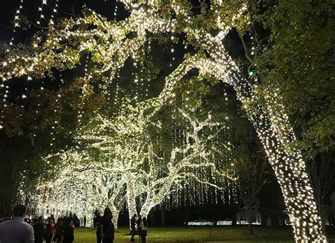 where to see lights in houston clumsy crafter