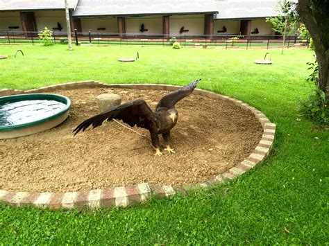 A Visit To The International Centre For Birds Of Prey