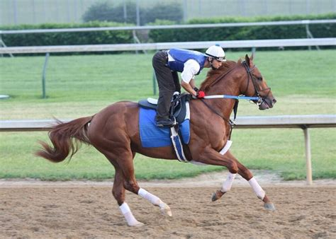 horses race horse curlin thoroughbred racing boys fame hall athletes into
