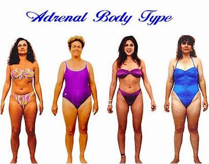 Adrenal Type Shape Female Test Womens Types