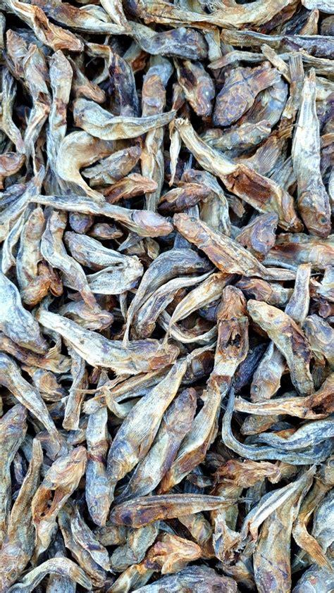 Kaltēta zivs jūras grundulis