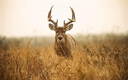 Deer Realtree Wallpapers Background
