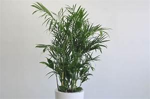 Plante Verte Salle De Bain : plantes pour salle de bain style nature meuble et d coration marseille mobilier design ~ Melissatoandfro.com Idées de Décoration