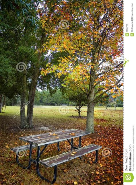 picnic table  tree stock photo image  leaves