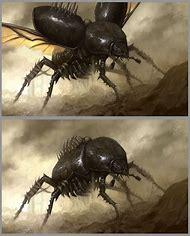 Flesh-Eating Scarab Beetle