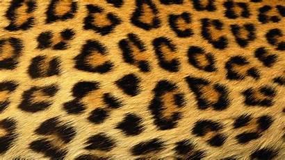 Leopard Wallpapers Cheetah Pixelstalk 1080 1920