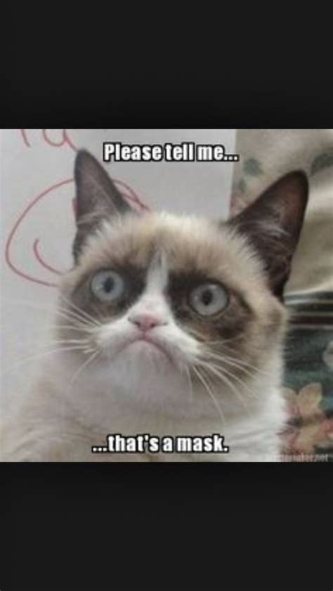 As 4074 Melhores Imagens Em Grumpy Cat No Pinterest