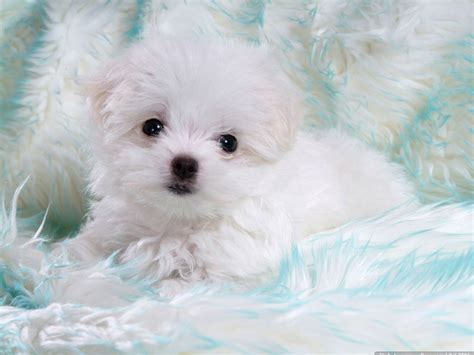 Baby Dog High Quality Wallpapers Free Download