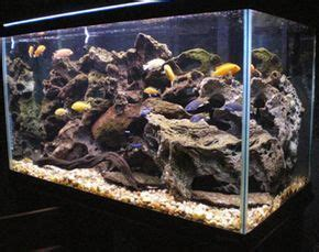 How To Set Up An Aquascape by How To Set Up And Aquascape A Cichlid Habitat